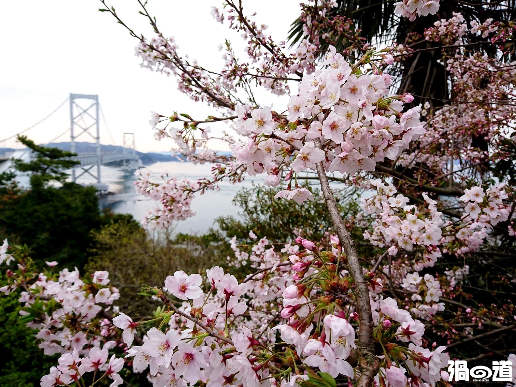 春の大鳴門橋